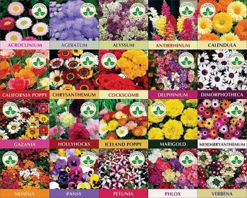 Twenty Winter Flower Seeds(4800+ Seeds) with Instruction manual