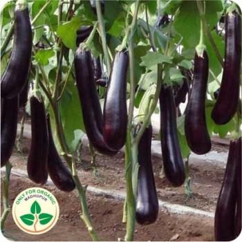 Hybrid Brinjal Purple Long Seeds