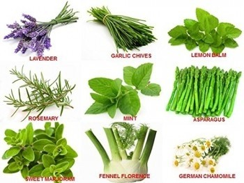 Combo of Nine Exotic Herbs