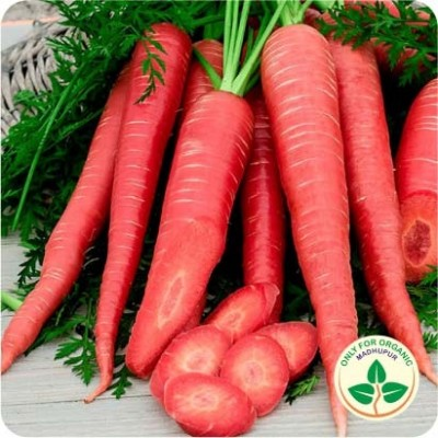 Carrot Red Long Seeds