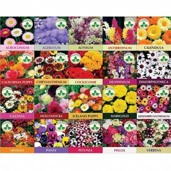 20 Winter Flower Seeds. Get Cocopeat Block Free with Instruction Manual