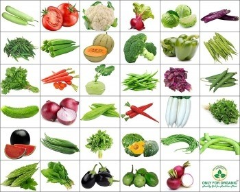 Combo of 15 winter vegetable seeds