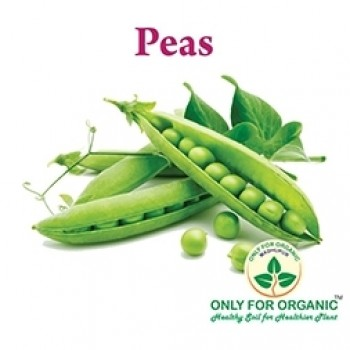 Green Peas Seeds