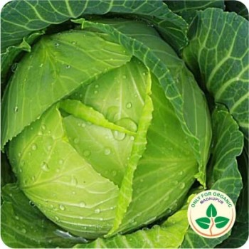 Cabbage Green Seeds