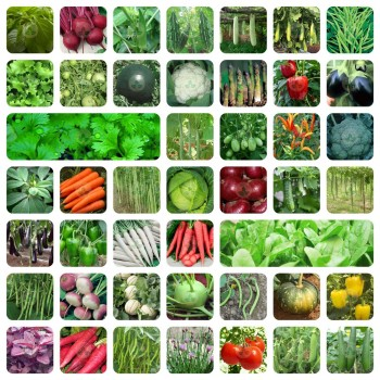 45 Variety of Vegetable Seeds with Instruction Manual