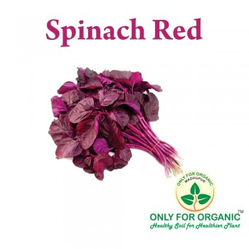 Red Spinach seeds